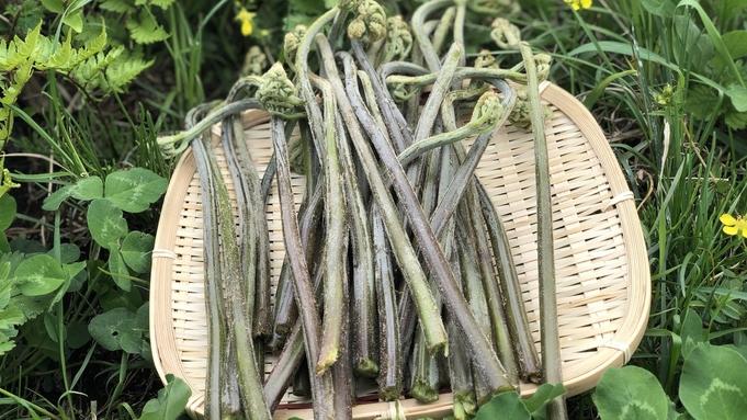 <6・7月限定>食べて採って、旬の山菜をたっぷり味わう★お土産に持って帰れる♪わらび採り体験付プラン