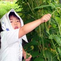 *新鮮な夏野菜を自分で収穫!