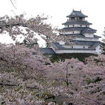 *鶴ヶ城桜