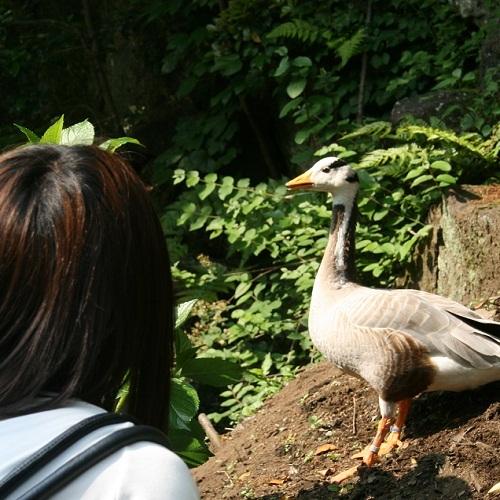 ■伊豆シャボテン公園(鳥を間近に)