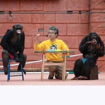 ■伊豆シャボテン公園(チンパンジー)