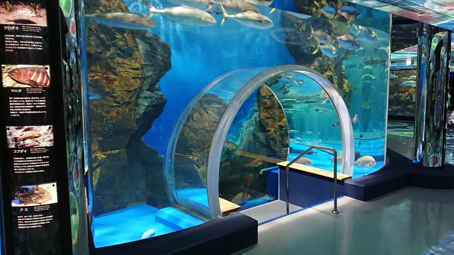 【のとじま水族館】のと海遊回廊