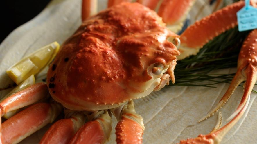 【加能蟹】甘味の強い石川のブランド蟹