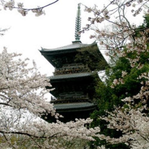 清水寺(春)