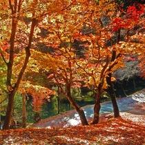 秋には紅葉もお楽しめいただけます。