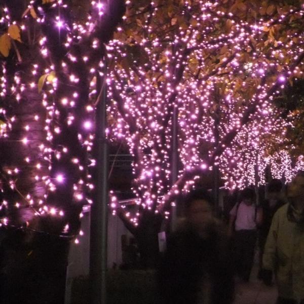 【600600】目黒川みんなのイルミネーション2012 街路樹