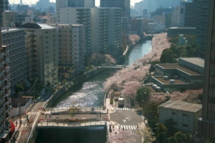 【950×633】客室から見える桜並木