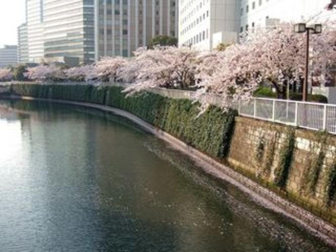 【950×713】20090407桜1