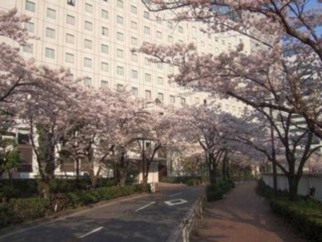 【950×713】20090406桜2