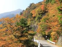 紅葉の土須峠