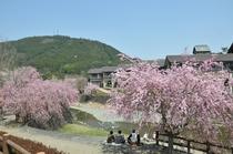 ふれあい公園はしだれ桜の名所