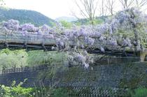 藤橋を川面から眺める