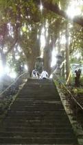 一本杉庵。