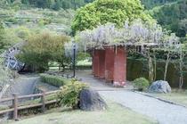 藤棚もふれあい公園の名所です。