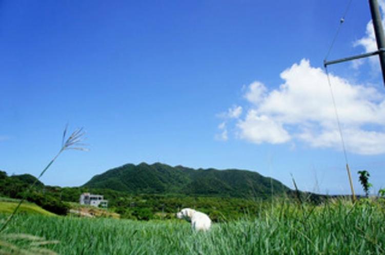 nico-stay前の牧草地