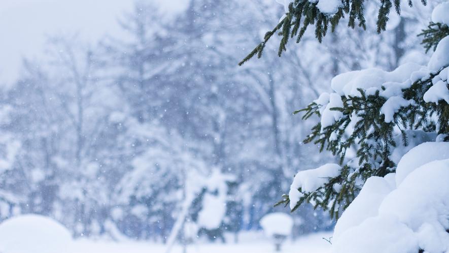 【庭園】冬 一面銀世界