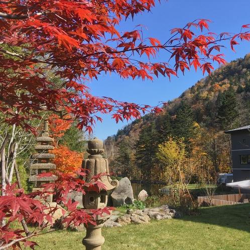【庭園・秋】美しく色づく秋の木々