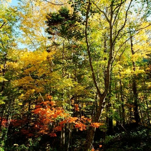 【庭園】秋