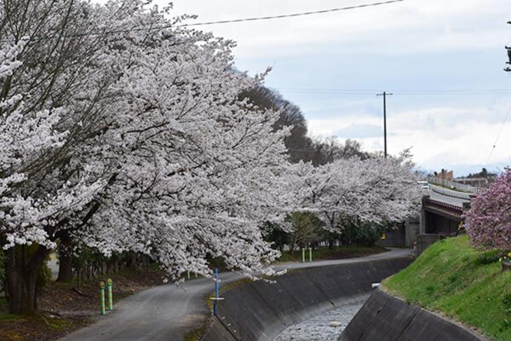 古城荘前には桜が綺麗に咲き誇ります