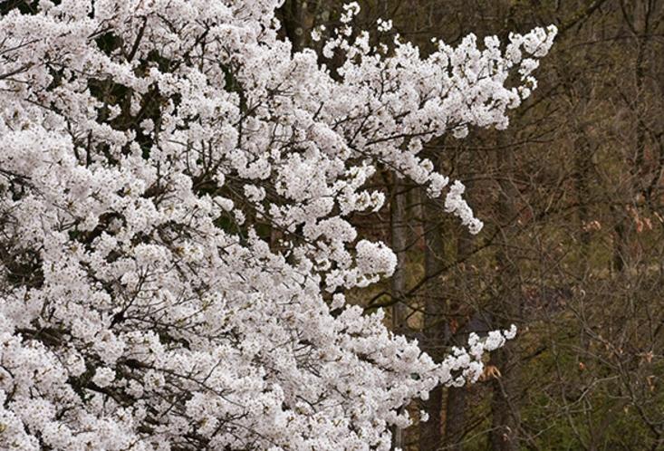 桜の見えるお部屋もございます。