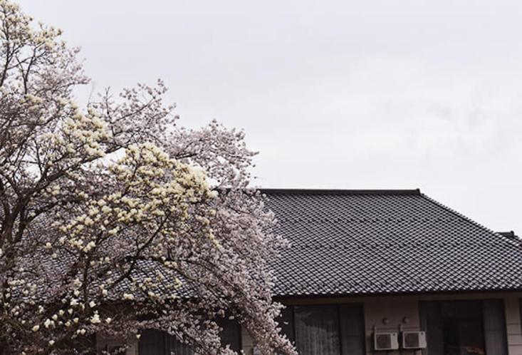 桜の時期の古城荘