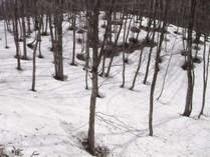 雪解け間近の正直村
