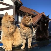 3匹のネコたち