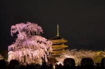 東寺(春)