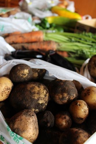 地産地消の野菜