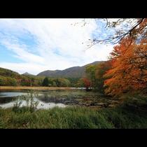 観音沼と紅葉をお楽しみ下さい。