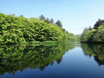 観光 雲場池1