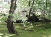 近隣 別荘の苔庭1