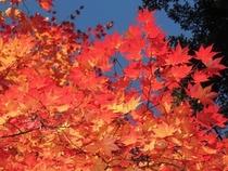 近隣 紅葉景色11