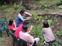 庭園 草木24 ユースゲ