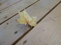 施設 テラスの落ち葉
