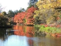 観光 雲場池3