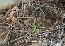 施設 軒下に小鳥の巣