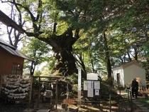 観光 熊野神社3