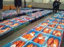沼津魚市場の様子