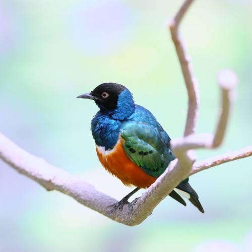 掛川花鳥園 小鳥