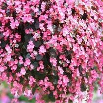 掛川花鳥園 花