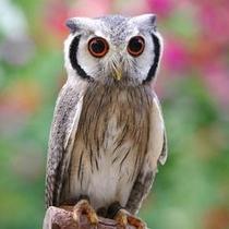 掛川花鳥園 フクロウ