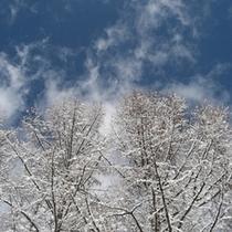 冬(雪景色)