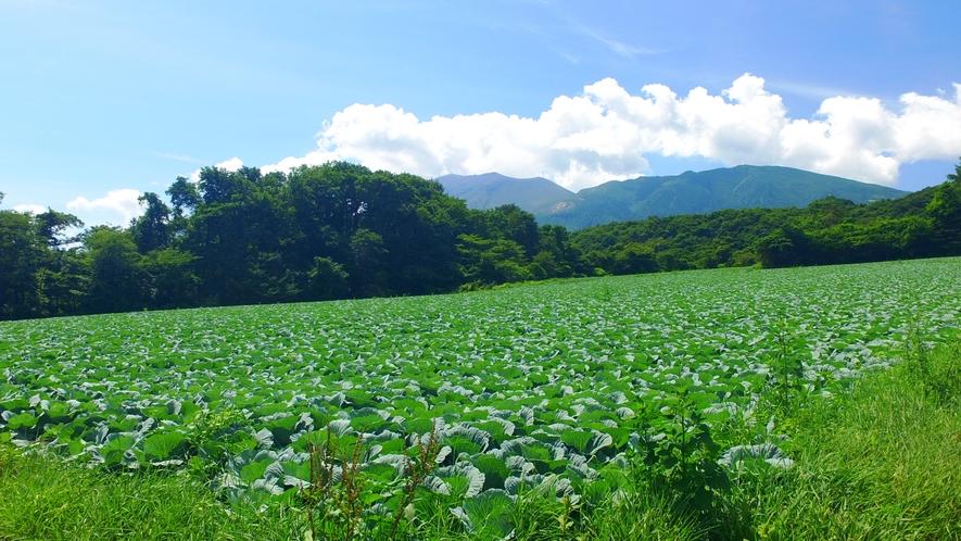 嬬恋村といえばキャベツ!生産量日本一です。
