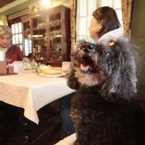 レストラン。ペットと一緒に自慢の手作り料理に舌鼓♪