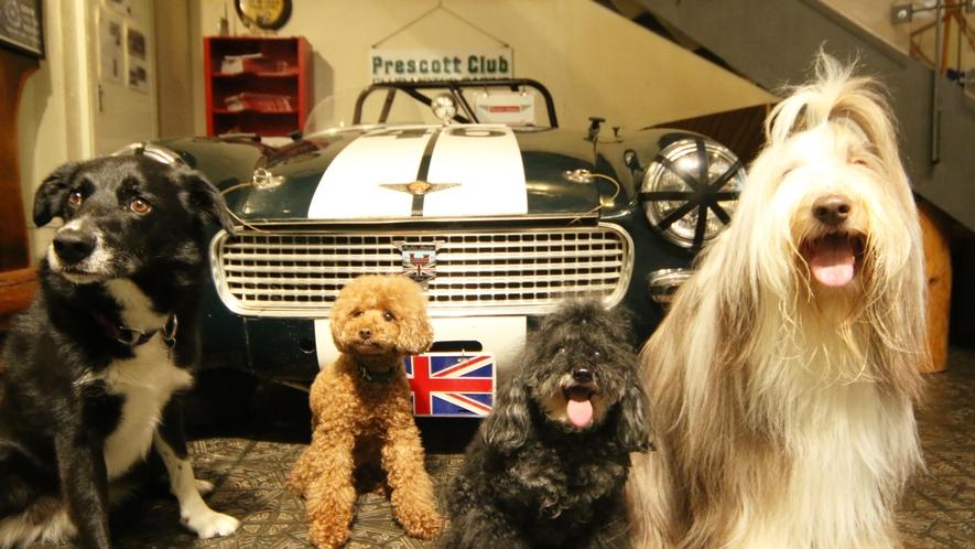 当館の看板犬たちがお客様をお待ちしています。