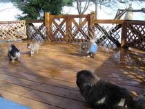9.「雪の日のミニドッグラン」広めのテラスは小型犬の遊び場に♪
