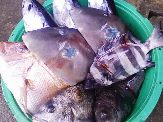 【祝い魚】地魚3種・伊勢海老舟盛☆今朝獲れ魚!牛陶板焼き