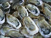 浦村産の「牡蠣」