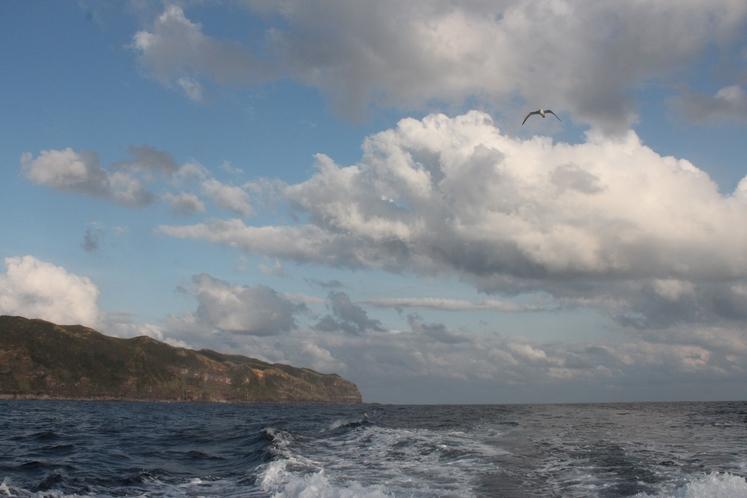 海鳥と八丈島
